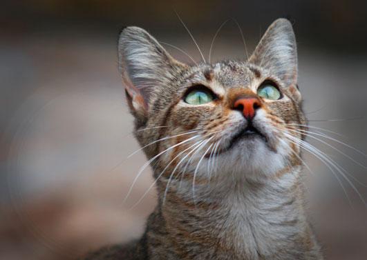 cursos fotografia vigo, gato ojos verdes